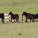 Trekking a cavallo e con gli asinelli sui Monti Sibillini