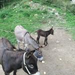 Trekking e Passeggiate con gli Asinelli ad Altino di Montemonaco33