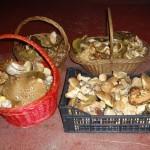 Weekend dei Funghi al Rifugio Altino2