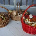 Weekend dei Funghi al Rifugio Altino3