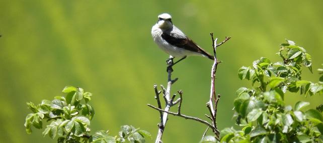 Weekend al Rifugio Altino per la Fiera degli Uccelli