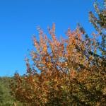 Altino di Montemonaco nei Monti Sibillini1