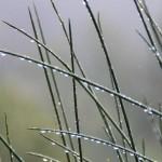 Weekend degli uccelli al Rifugio Altino18