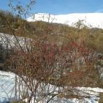 Ispezione prima del trekking nei dintorni del Rifugio Altino di Montemonaco12