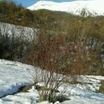 Ispezione prima del trekking nei dintorni del Rifugio Altino di Montemonaco13
