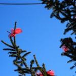 Escursione di Capodanno dal Rifugio Altino a Santa Maria in Pantano4