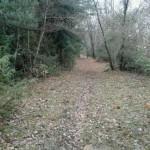 Escursione di fine anno dal Rifugio Altino a Rocca e Tofe e ritorno13