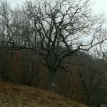 Escursione di fine anno dal Rifugio Altino a Rocca e Tofe e ritorno9