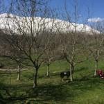 Domenica di Primavera al Rifugio Altino23