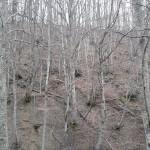 Escursione sul Sentiero delle Cacce dal Rifugio Altino di Montemonaco19