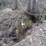 Escursione sul Sentiero delle Cacce dal Rifugio Altino di Montemonaco26