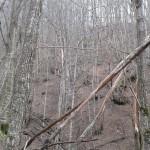 Escursione sul Sentiero delle Cacce dal Rifugio Altino di Montemonaco36