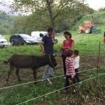 Festa del Cinghiale e degli Asinelli al Rifugio Altino di Montemonaco50