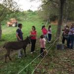 Festa del Cinghiale e degli Asinelli al Rifugio Altino di Montemonaco51