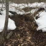 Ciaspolata per Famiglie al Rifugio Altino con gli animali del bosco13