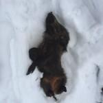 Ciaspolata per Famiglie al Rifugio Altino con gli animali del bosco8