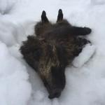Ciaspolata per Famiglie al Rifugio Altino con gli animali del bosco9
