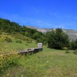 Ponte del 2 Giugno al Rifugio Altino di Montemonaco6