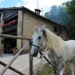 Weekend di fine Giugno al Rifugio Altino di Montemonaco