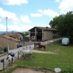 Weekend di fine Giugno al Rifugio Altino di Montemonaco1