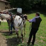 Weekend di fine Giugno al Rifugio Altino di Montemonaco64