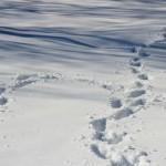 La prima neve della stagione al Rifugio Altino15