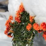 La prima neve della stagione al Rifugio Altino24